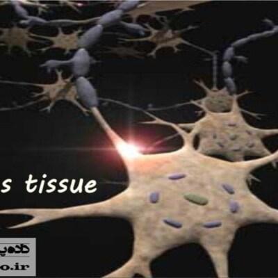پاورپوینت آناتومی بافت عصبی